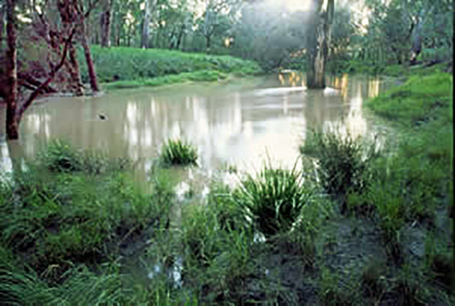 Dawson River near Glebe Weir in area to be flooded by Nathan Dam