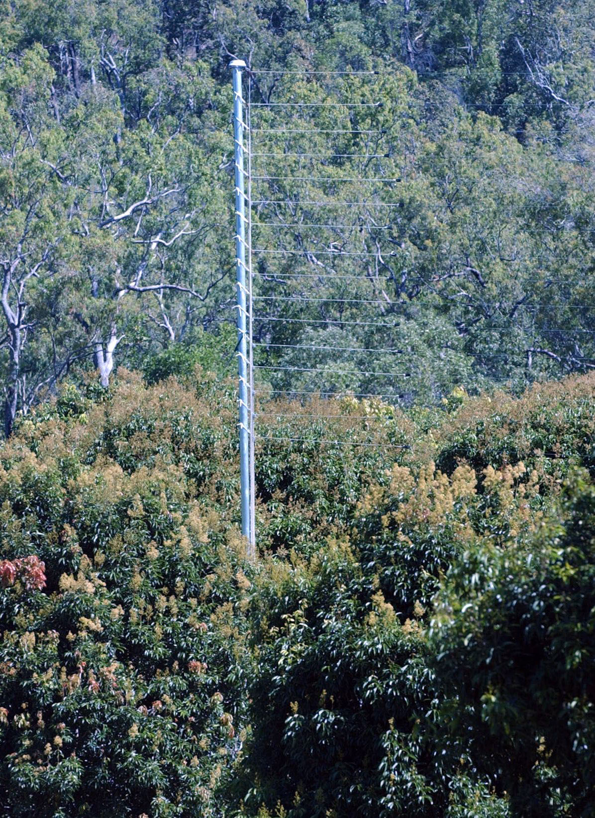 Image of electric grid above lychee trees Source: Townsville Bulletin, 6 September 2005
