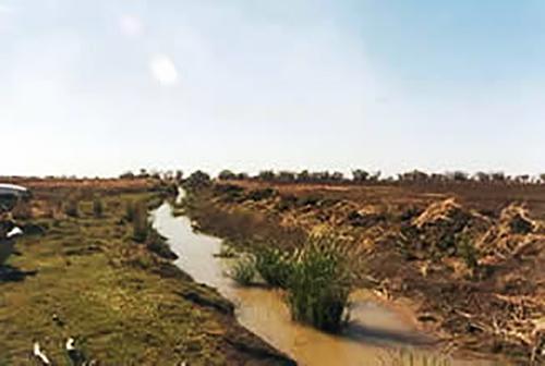 Windella Ramsar wetland after clearing