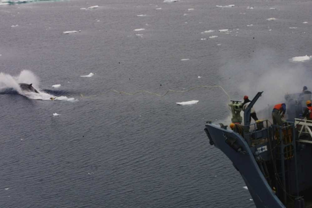 Harpoon fired at a minke whale by employees of Kyodo Senpaku Kaisha Ltd on 16 December 2001 approximately 40 nautical miles within the Australian Whale Sanctuary Source: Greenpeace photographer Jeremy Sutton-Hibbert, 2001